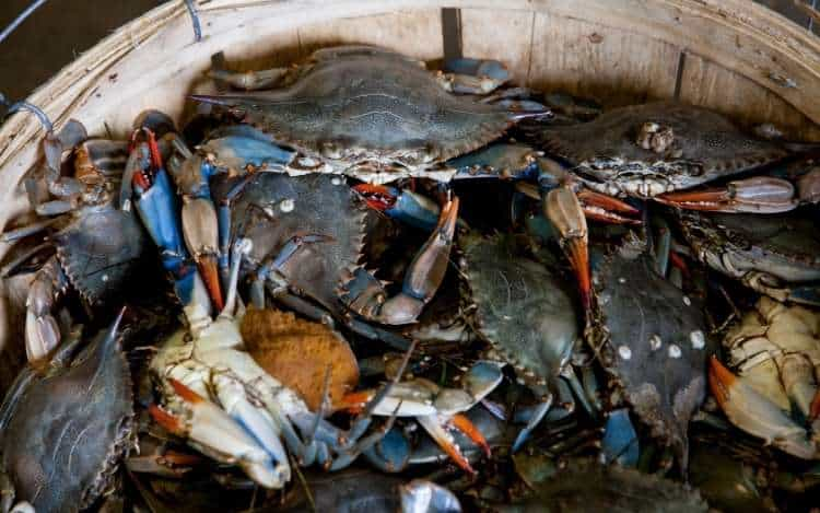 Crabs in a Bucket Mentality – The Phenomenon Explained